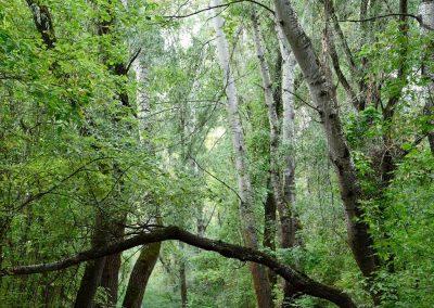 Túraszervezés: Mocsárba, őserdőbe...